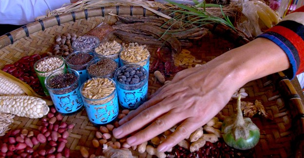Akha Indigenous Women of Pak-Kia village in northern Thailand play crucial role in the preservation of indigenous seeds, transfer of Indigenous Knowledge, and the maintenance of food security and well-being of community members.